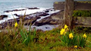 041316_Landmines&Daffodils